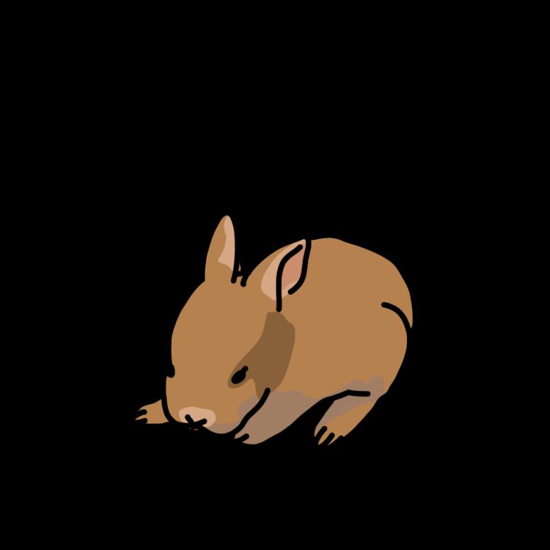 眠くて暴れるウサギ赤茶