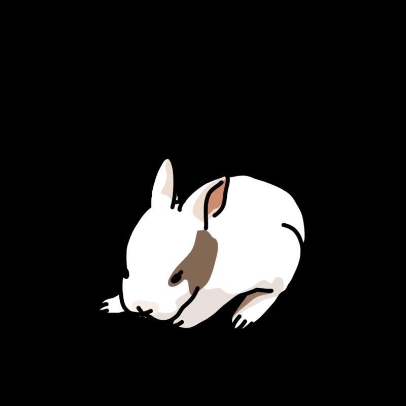 眠くて暴れるウサギ白