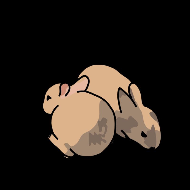 温まるウサギ2野ウサギ