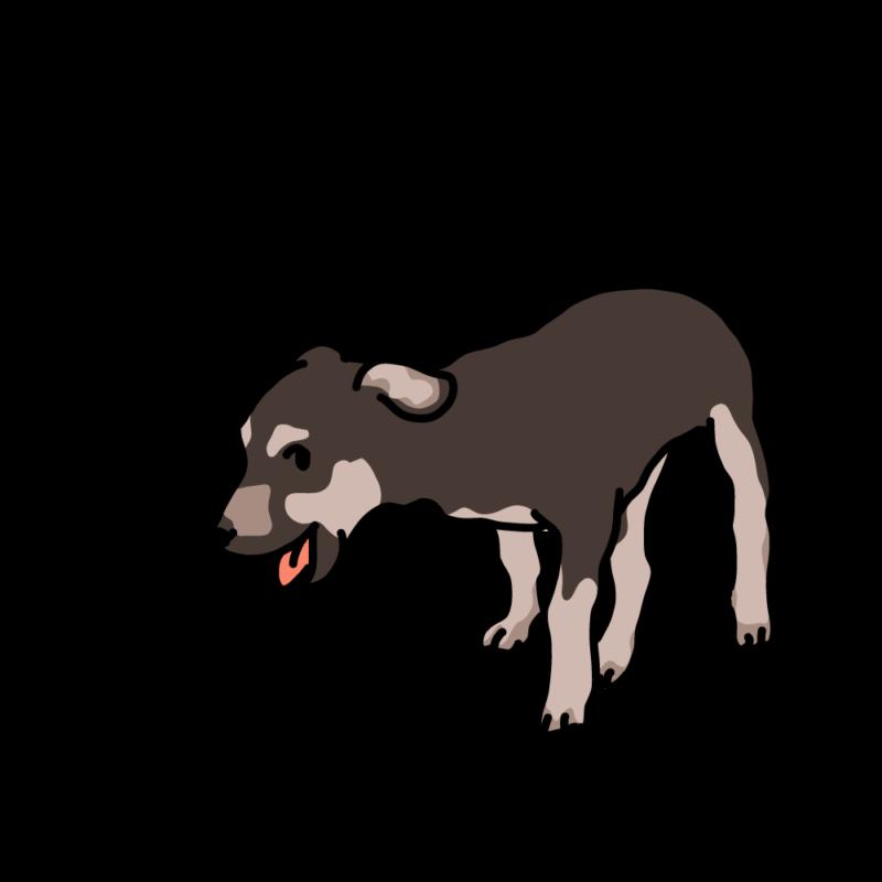 ウキウキな仔犬コゲ