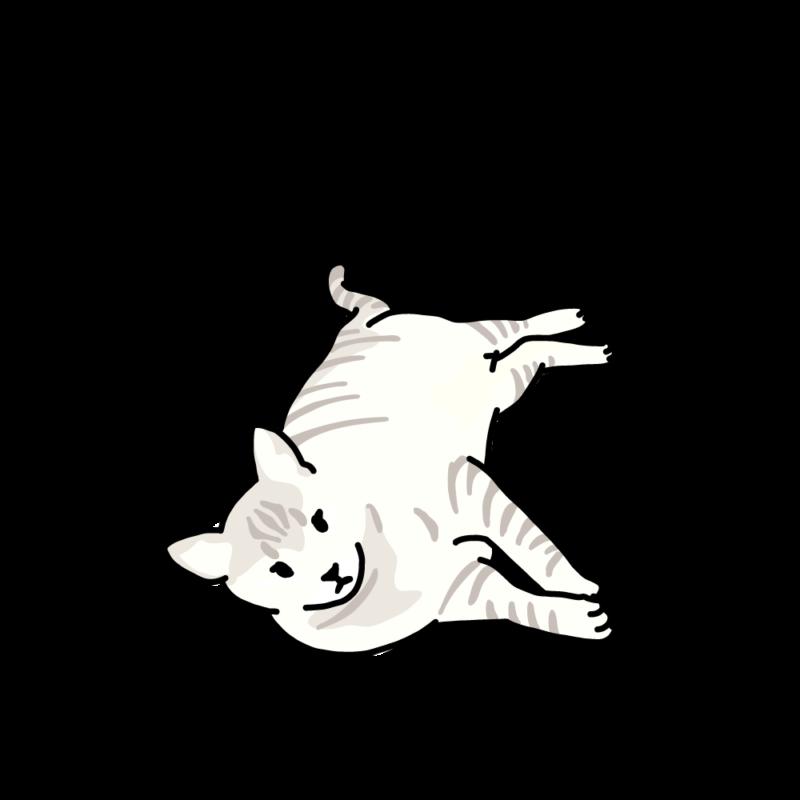ぼくはトラ(ネコ)ホワイト
