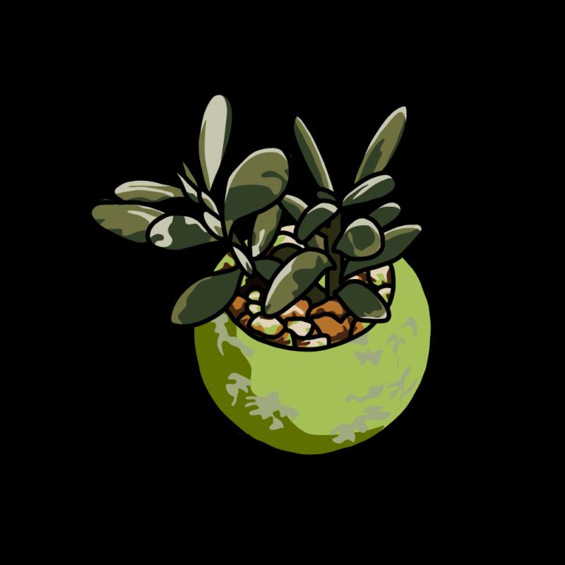 多肉植物ポッドグリーン