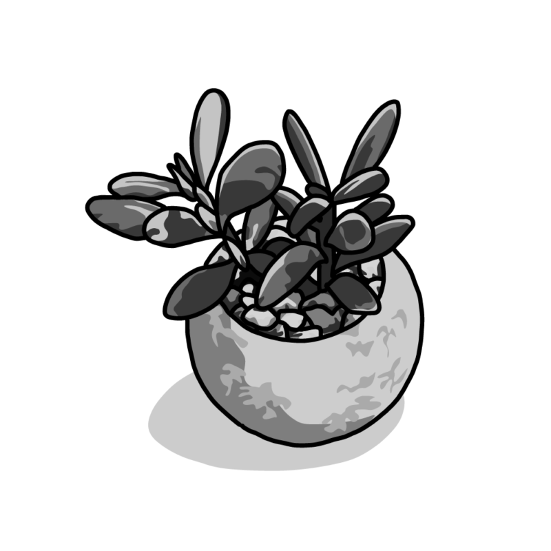 多肉植物ポッドモノクロ