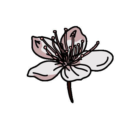 桜フレーク1個