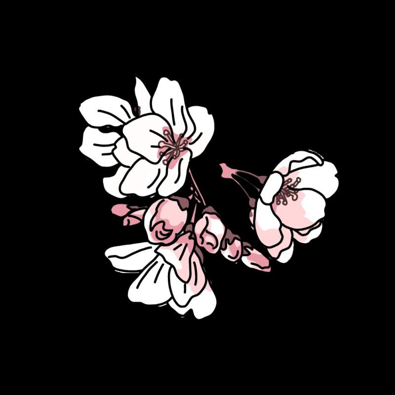 桜塊ライト