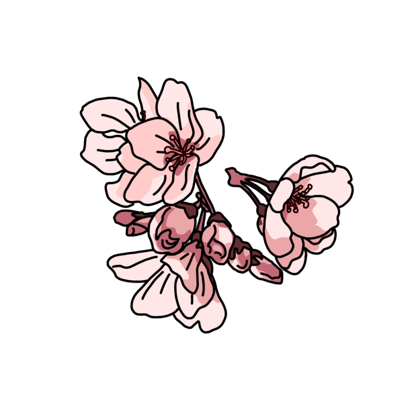 桜塊ピンク