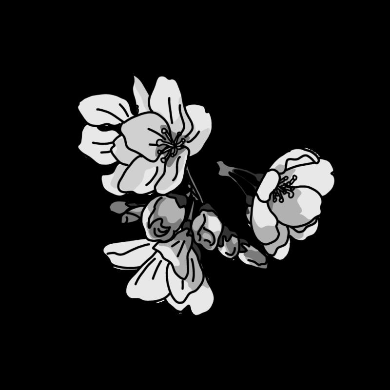桜塊モノクロ