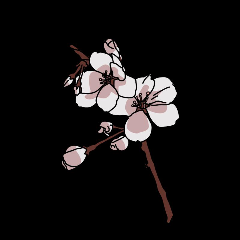 桜の小枝シック