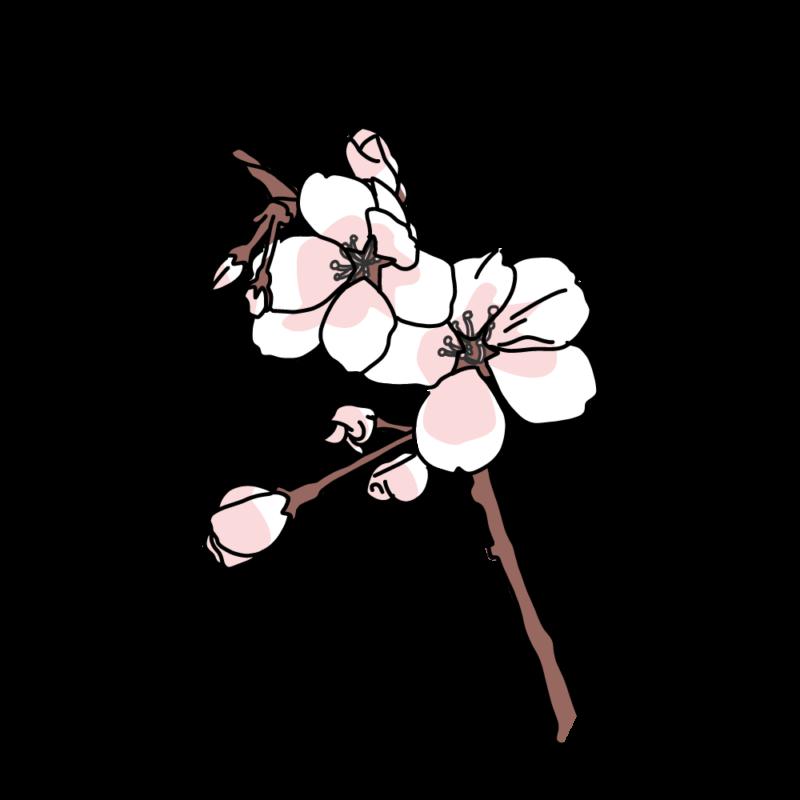 桜の小枝ピンク