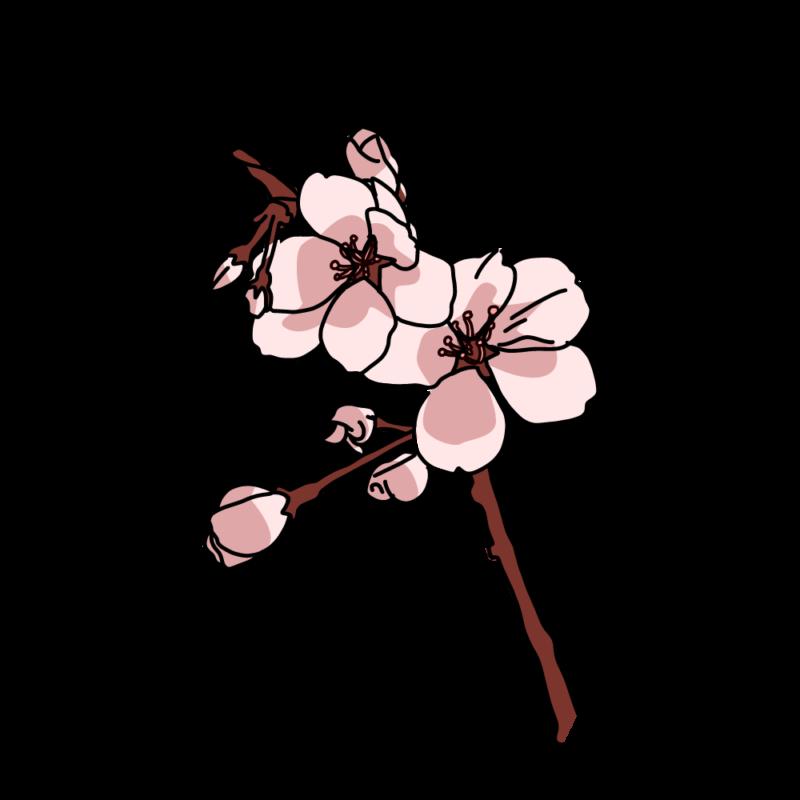桜の小枝濃い桃