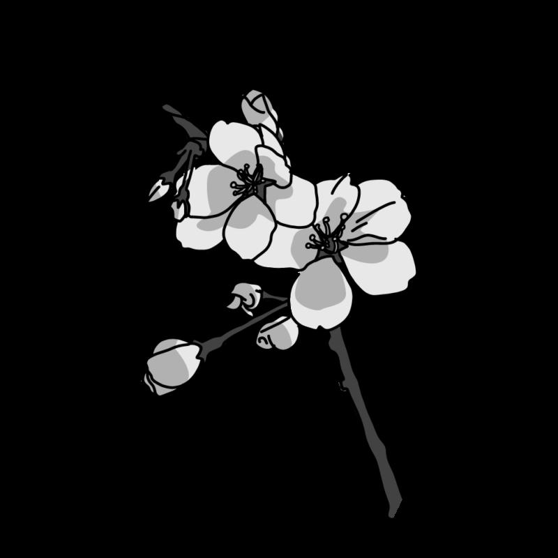 桜の小枝モノクロ
