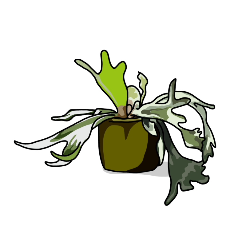 コウモリラングリーン