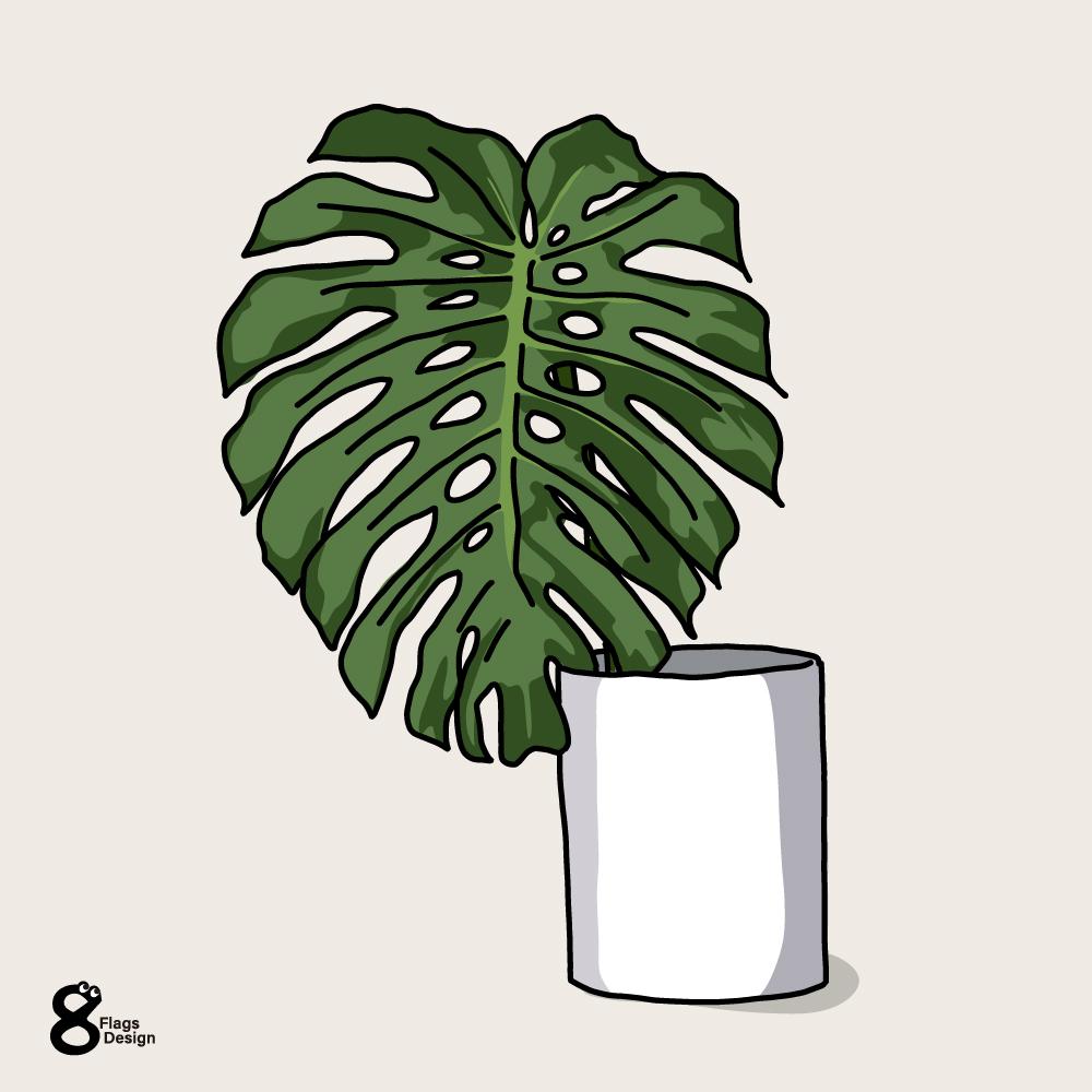 モンステラの花瓶のキャッチ画像
