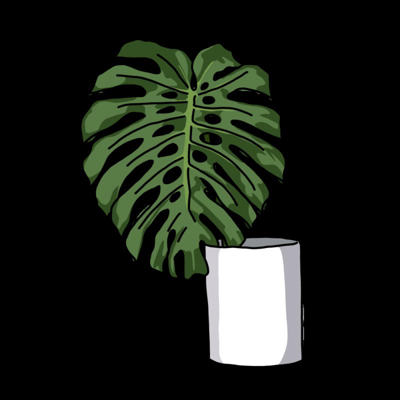 モンステラの花瓶白