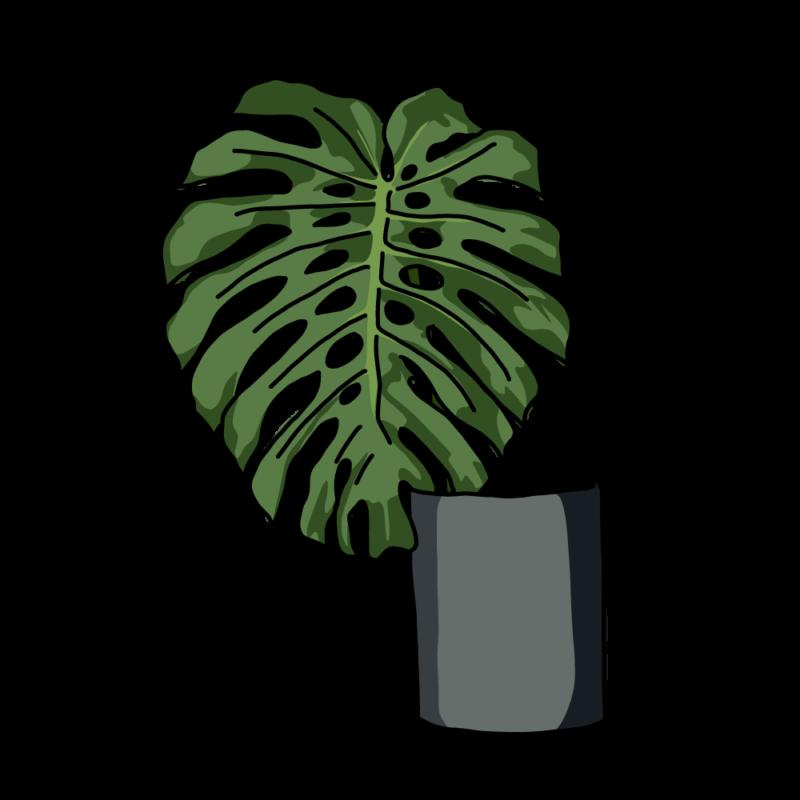 モンステラの花瓶黒