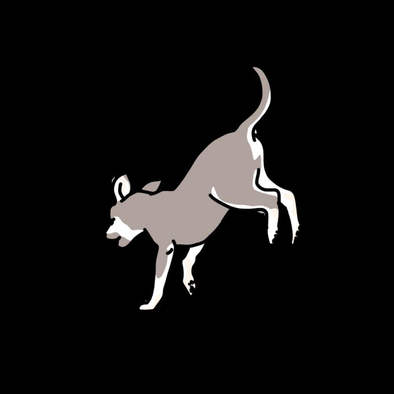 ジャンピング犬グレー