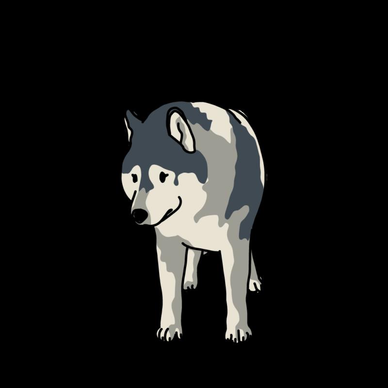 散歩なの?と聞いてくるオオカミ犬グレー
