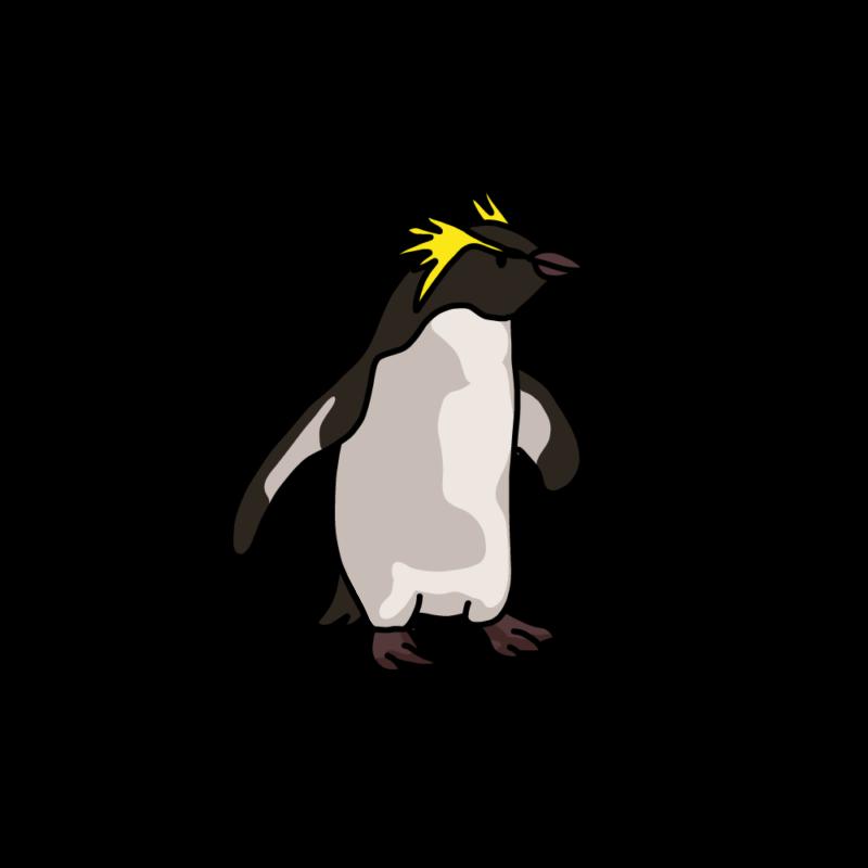 遊びに行くイワトビペンギン夕方