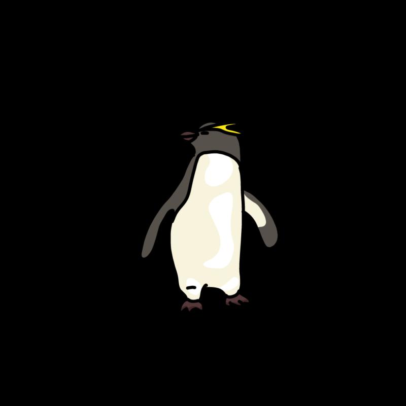 振り向くイワトビペンギンイエロー