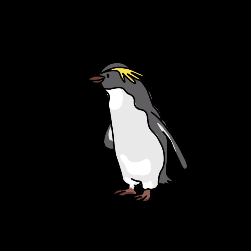 水が冷たいイワトビペンギンイエロー