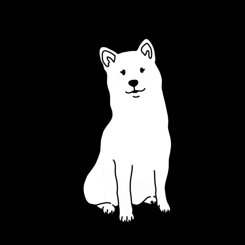 フワフワ柴犬白