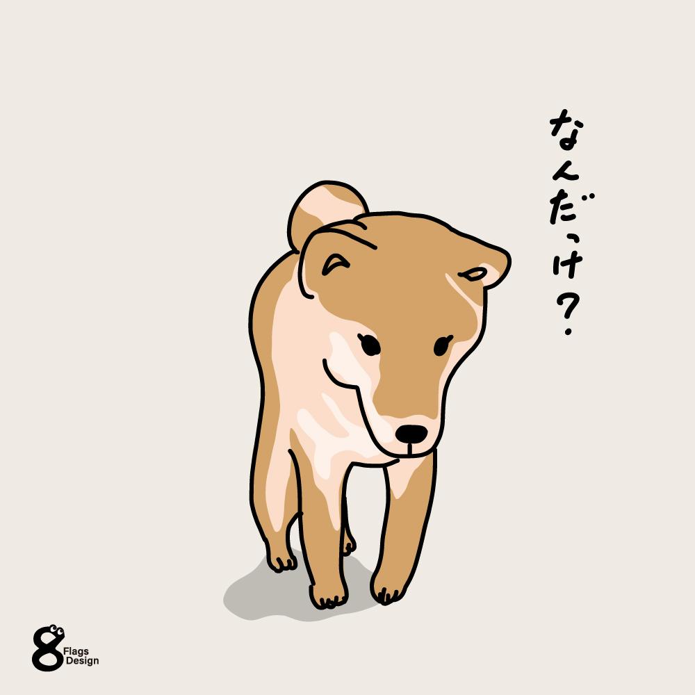 分かんなくなった柴犬のキャッチ画像