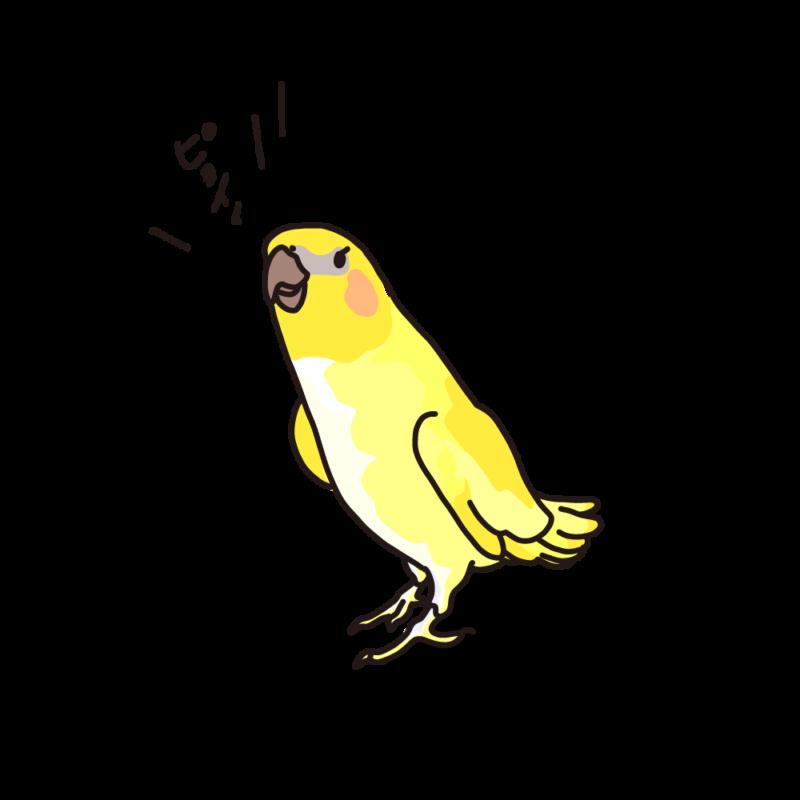俺を見ろ!オカメインコ黄色