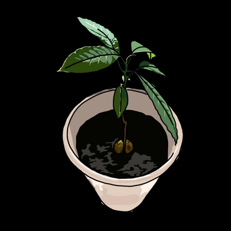 アボカドの木ベージュ