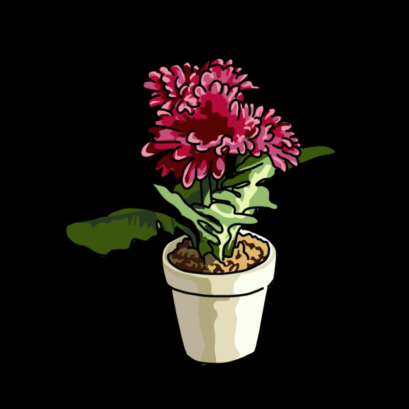 春の花の鉢パープル