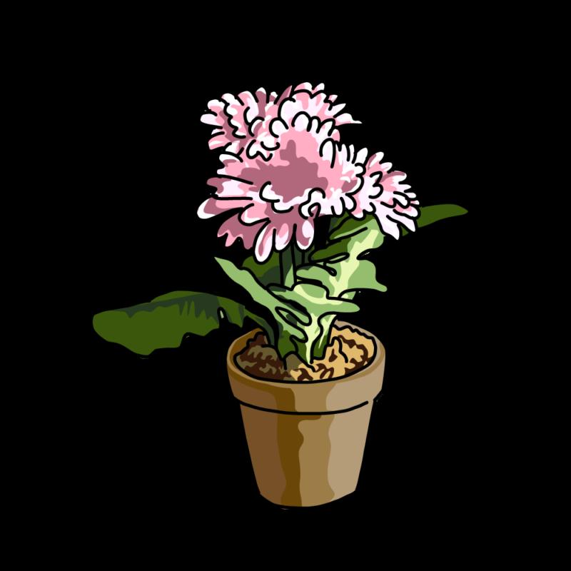 春の花の鉢ピンク