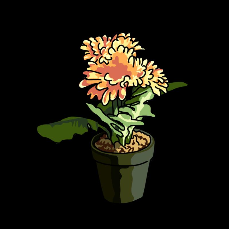 春の花の鉢オレンジ