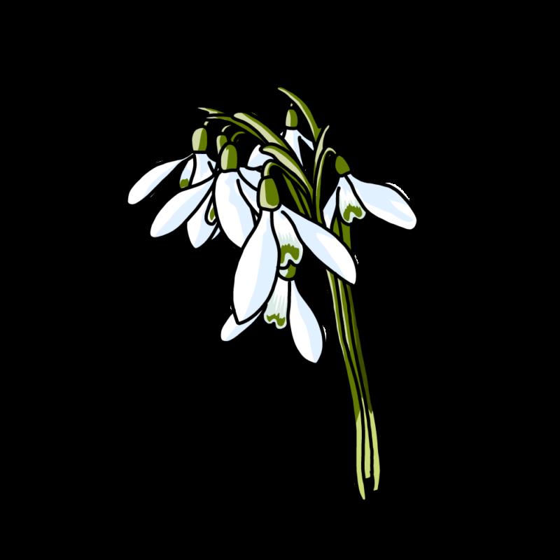 スノードロップの花束ブルー