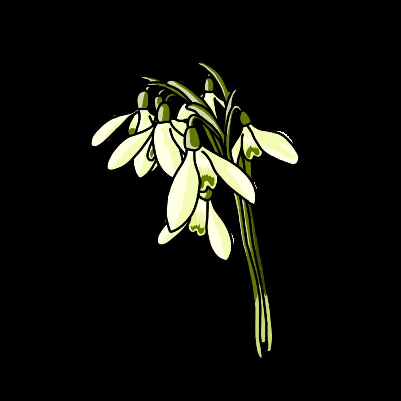スノードロップの花束イエロー