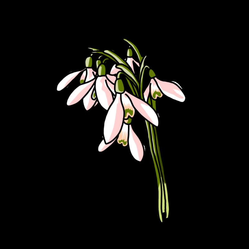 スノードロップの花束ピンク