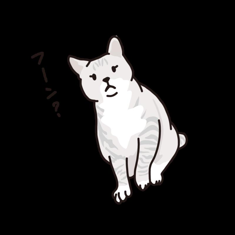 構って欲しいネコ白