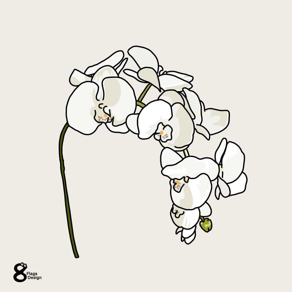 胡蝶蘭のキャッチ画像