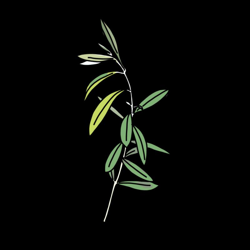 オリーブの枝1本ライト