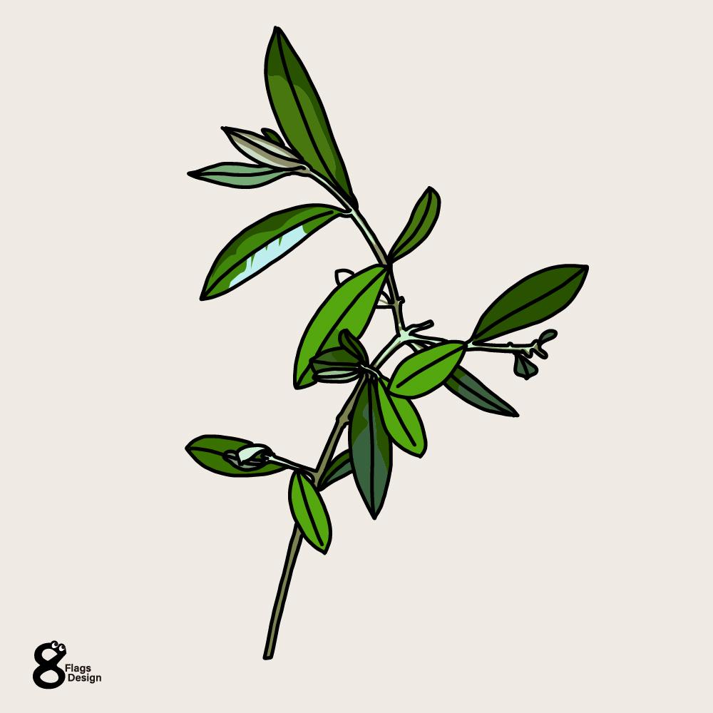 オリーブの枝繁りのキャッチ画像