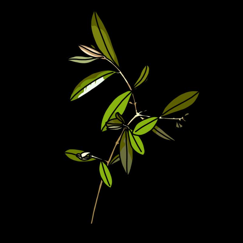 オリーブの枝繁りイエロー
