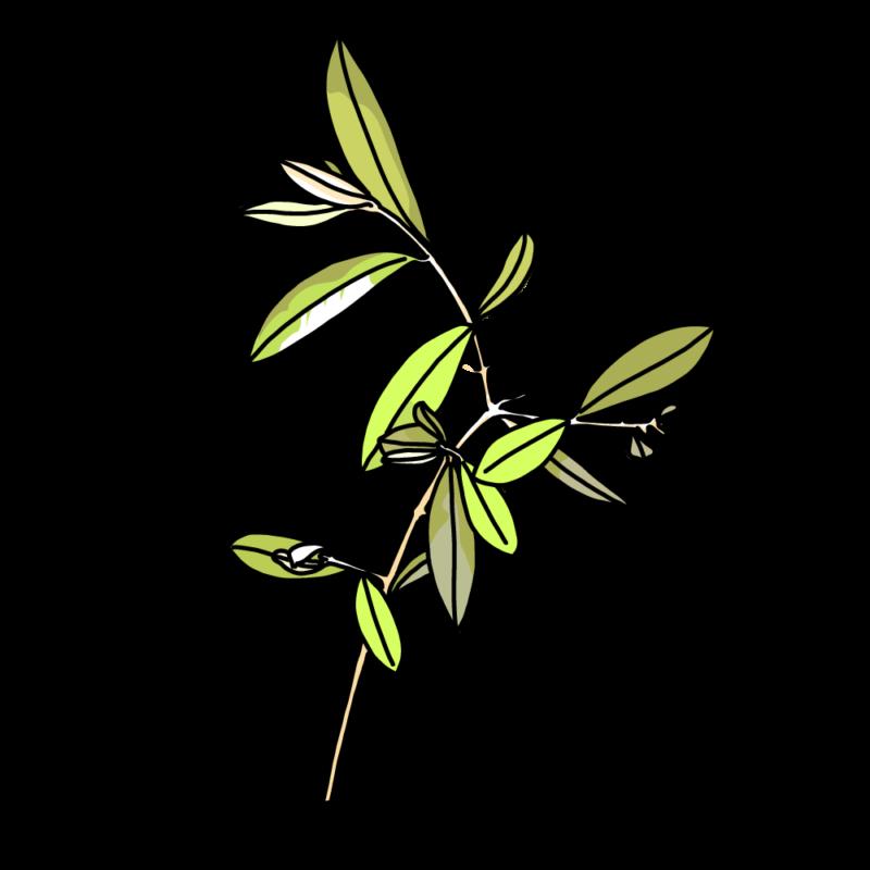 オリーブの枝繁りライト