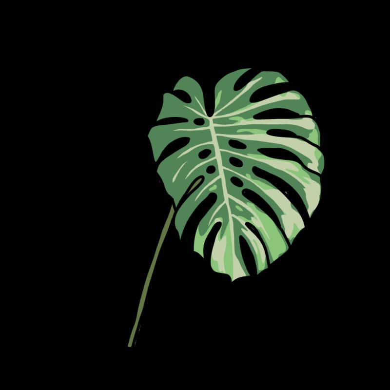 アロカシア(フレーク2)ライト