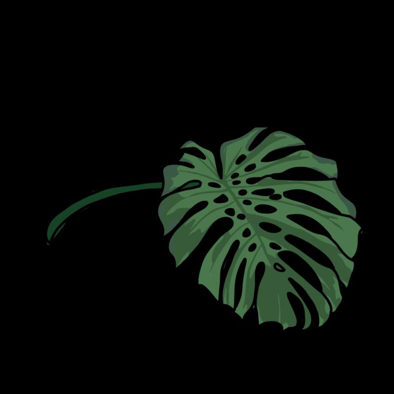 モンステラ(フレーク3)グリーン