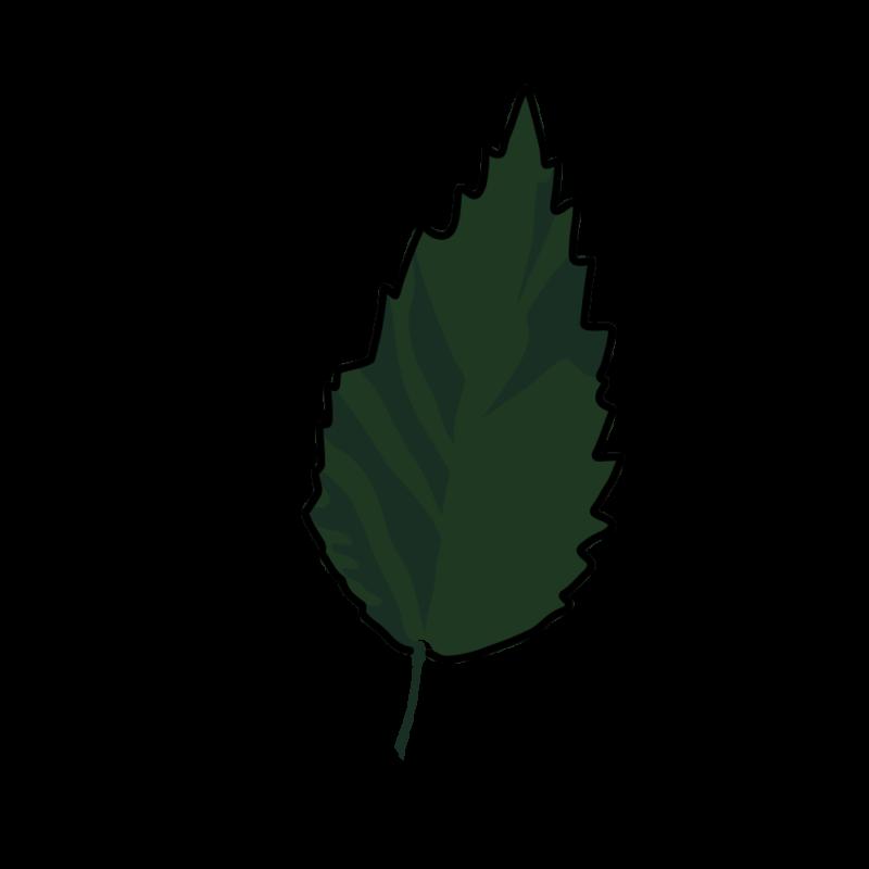 ハイビスカス02-8