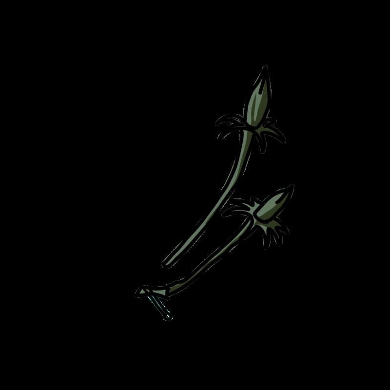 ハイビスカス02-10