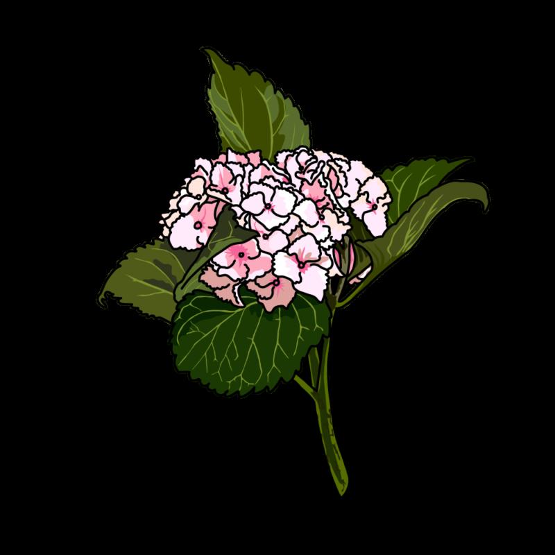 アジサイ02ピンク