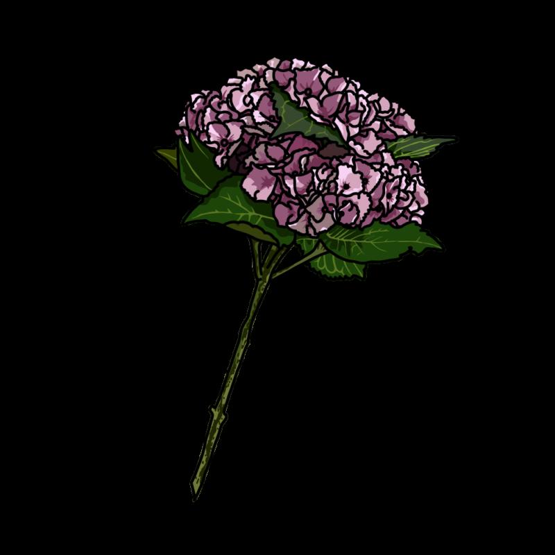 アジサイ01モスピンク