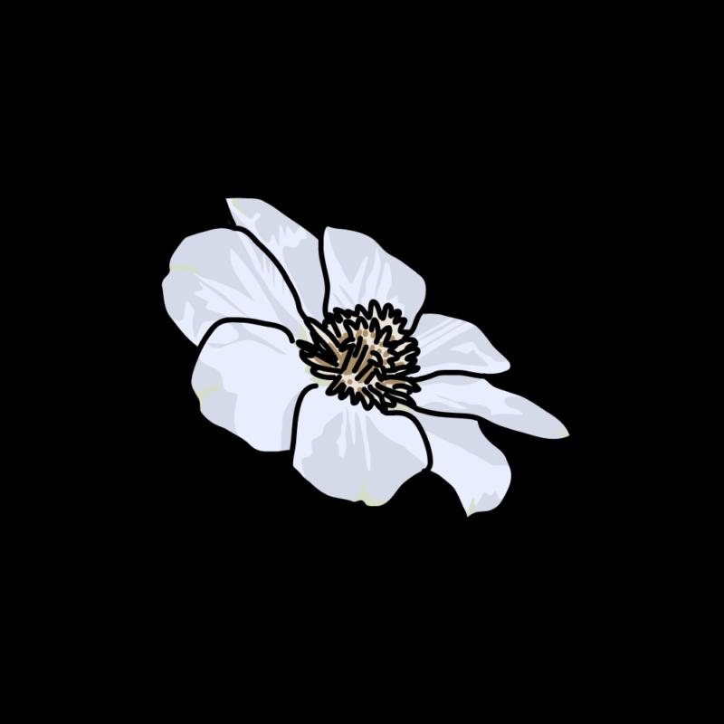白いクレマチス0103