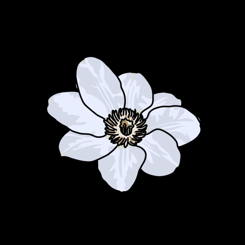 白いクレマチス0105