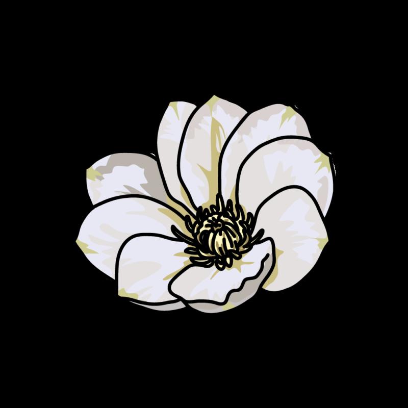 白いクレマチス0203