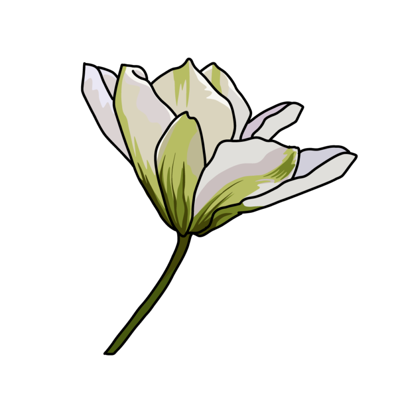 白いクレマチス0204